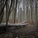 forest-3143157_960_720
